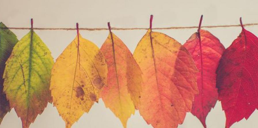 Herfst...